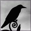 Аватар пользователя Птица с перьями черного цвета