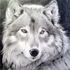 Аватар пользователя darina_stark