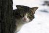 Аватар пользователя Тони_Р